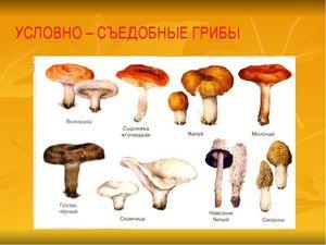 категории грибов