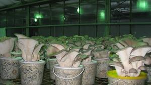Как выращивать грибы в домашних условиях
