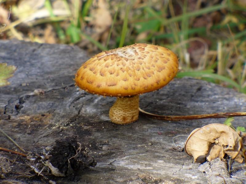 Какие грибы растут в октябре