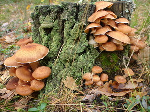 Какие грибы в октябре