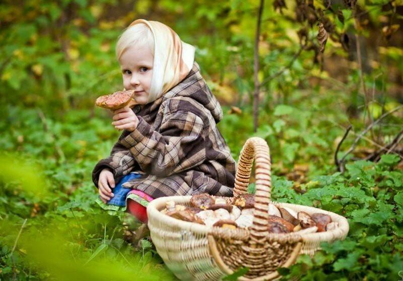 Какие грибы растут в волгоградской области